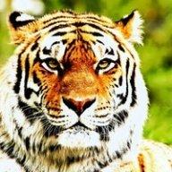 Tigrunka